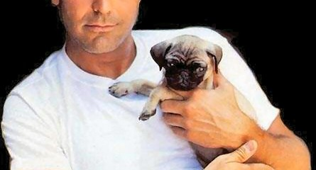 George Clooney with a pug. Your argument is invalid.