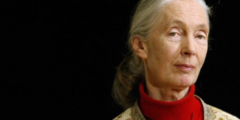 Jane Goodall couldn't give less of a shit what you think women can and can't do.