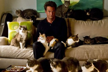 Matthew Perry and the ensemble of 'Go On' - I'm kidding, those are just a lot of cats.